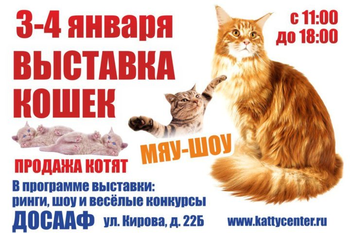 3-4 января 2018. Выставка кошек