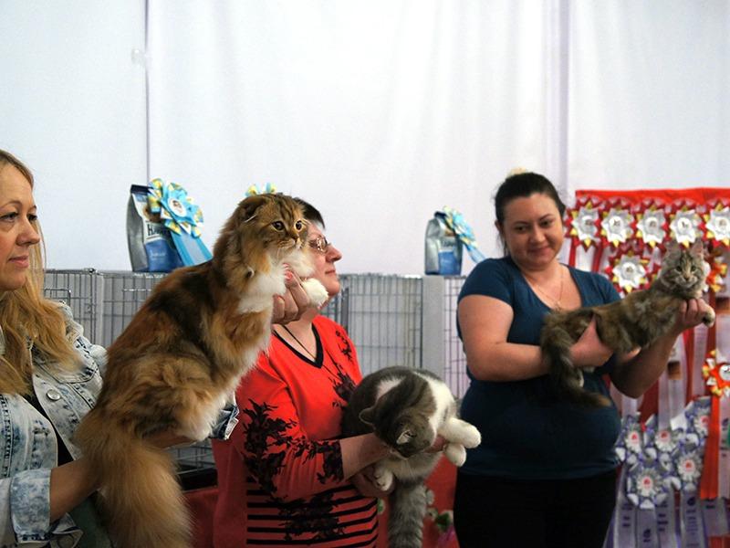 2-3 апреля 2016 - Выставка кошек. День 2.