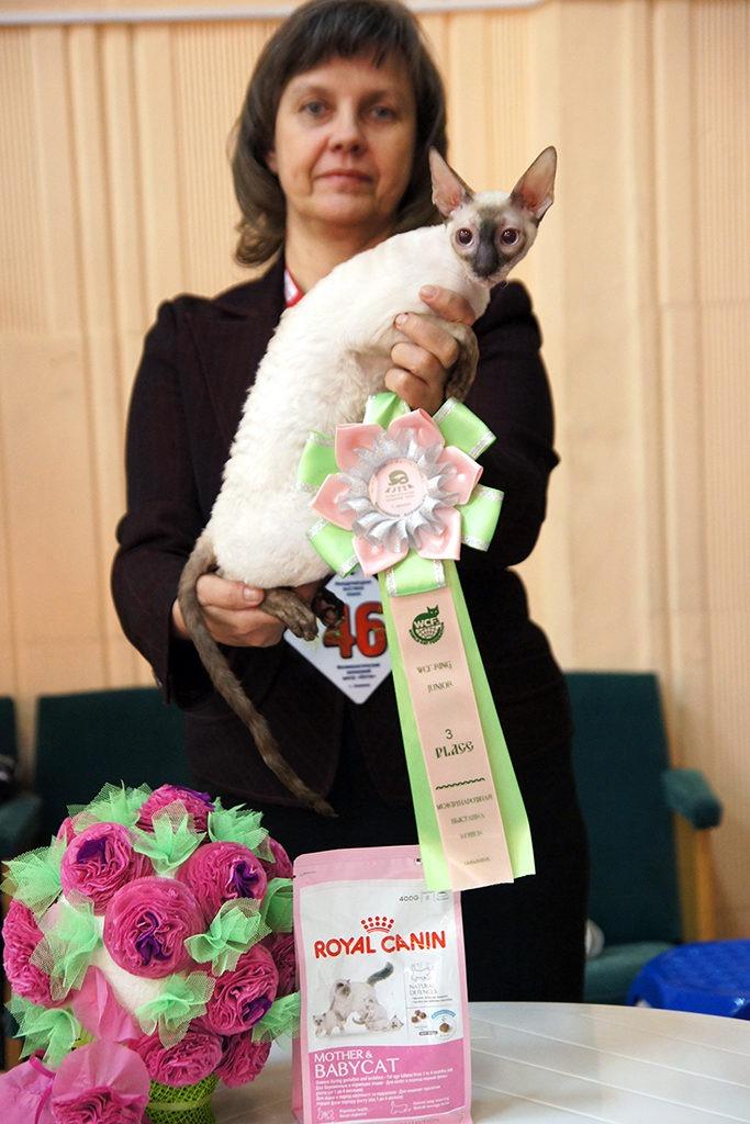 7-8 марта 2015 - Выставка кошек. День - 1