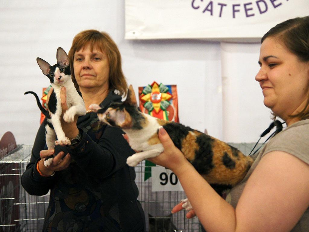 22-23 октября 2016 - Выставка кошек. Фоторепортаж.