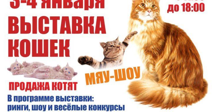 """3-4 января 2018. Выставка кошек """"Рождественские встречи"""""""